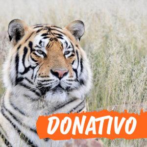 Donativo Invictus